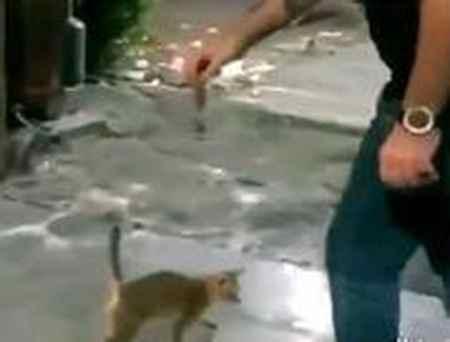 ماجرای شوت کردن گربه و واکنش مردم در فضای مجازی