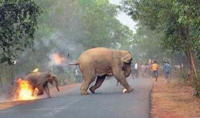 فرار فیل ها از آتش نامزد بهترین عکس حیات وحش جهان در سال 2017