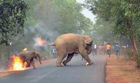 فرار فیل ها از آتش نامزد بهترین عکس حیات وحش جهان در سال 2017 فرار فیل ها از آتش نامزد بهترین عکس حیات وحش جهان در سال 2017