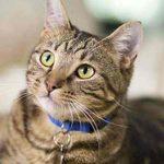 ماجرای مجید و گربه چیست؟ (عکس+فیلم)