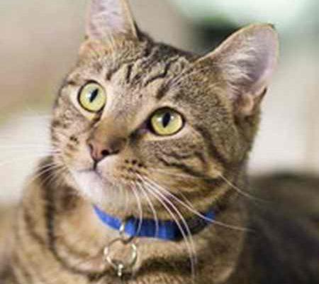 ماجرای مجید و گربه چیست؟ (عکس+فیلم) (1)