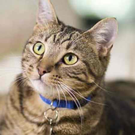 ماجرای مجید و گربه چیست؟ عکسفیلم 1 ماجرای مجید و گربه چیست؟ (عکس+فیلم)
