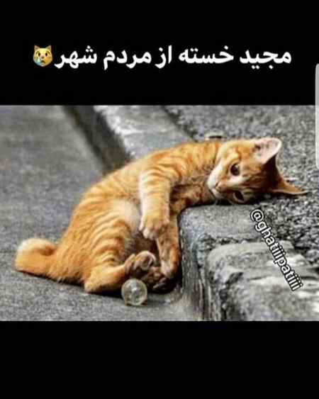 ماجرای مجید و گربه چیست؟ عکسفیلم 2 ماجرای مجید و گربه چیست؟ (عکس+فیلم)