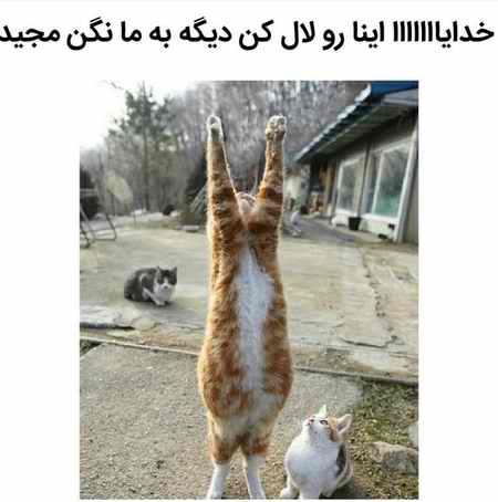 ماجرای مجید و گربه چیست؟ (عکس+فیلم) (3)