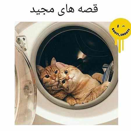 ماجرای مجید و گربه چیست؟ (عکس+فیلم) (4)