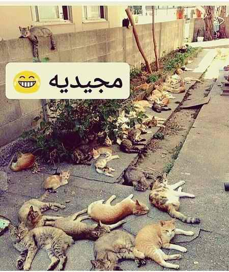 ماجرای مجید و گربه چیست؟ (عکس+فیلم) (5)