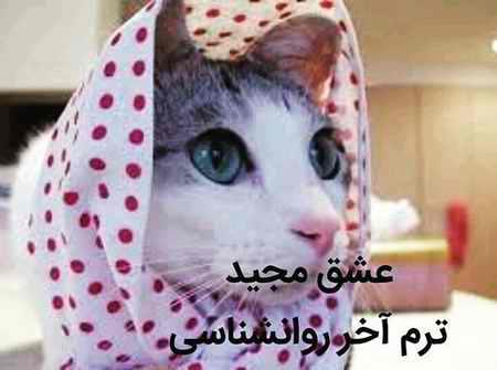 ماجرای مجید و گربه چیست؟ (عکس+فیلم) (6)