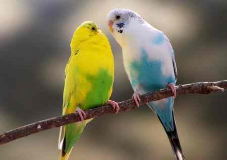کدام حیوان تندترین ضربان قلب را دارد