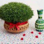 سبزه عید چند روزه سبز میشود
