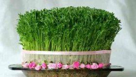 چرا سبزه کپک می زند و راه های جلوگیری از آن