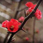انشا درباره مقایسه گل و خار خواندنی و ساده