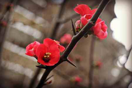 انشا درباره مقایسه گل و خار خواندنی و ساده انشا درباره مقایسه گل و خار خواندنی و ساده