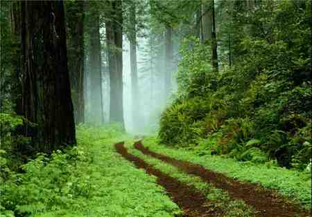 جنگل گیسوم کجاست 1 جنگل گیسوم کجاست