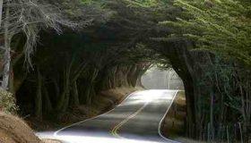 جنگل گیسوم کجاست
