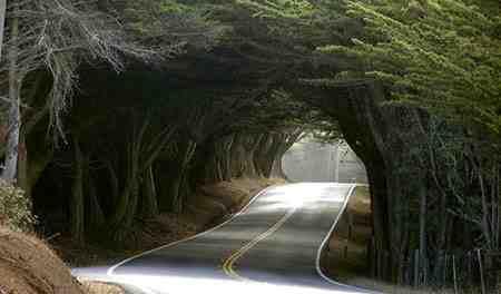 جنگل گیسوم کجاست 3 جنگل گیسوم کجاست