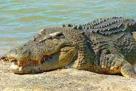 حیواناتی که با چشم باز می خوابند 3 حیواناتی که با چشم باز می خوابند