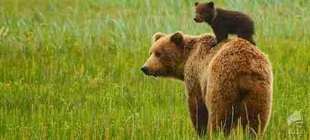 قویترین آرواره متعلق به کدام حیوان است 3 قویترین آرواره متعلق به کدام حیوان است