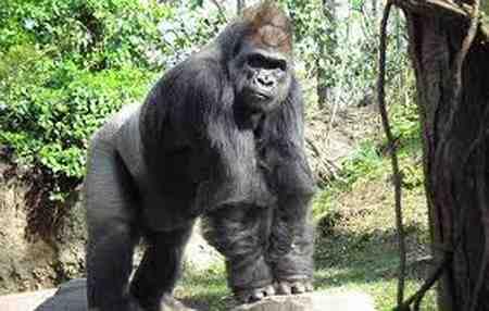 قویترین آرواره متعلق به کدام حیوان است 6 قویترین آرواره متعلق به کدام حیوان است