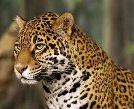 قویترین آرواره متعلق به کدام حیوان است 7 قویترین آرواره متعلق به کدام حیوان است