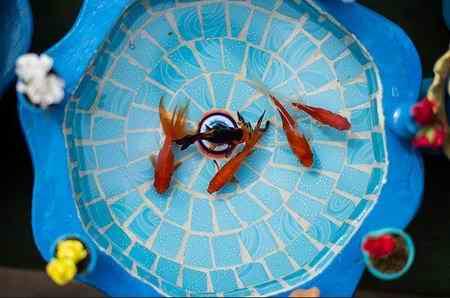 ماهی قرمز 1 چرا ماهی قرمز نخریم