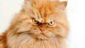 آیا گربه نجس است