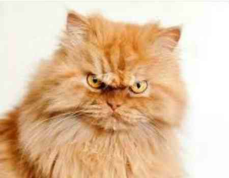 آیا گربه نجس است آیا گربه نجس است