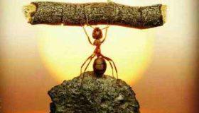 انشا درمورد دیدن مورچه ای که باری میکشد