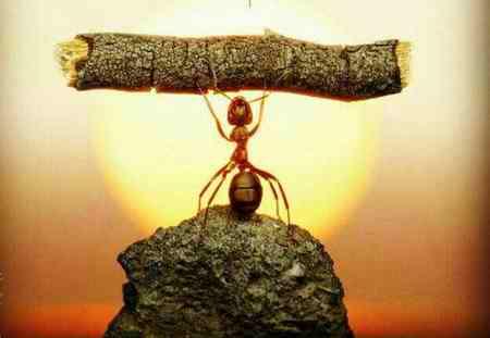 انشا درمورد دیدن مورچه ای که باری میکشد انشا درمورد دیدن مورچه ای که باری میکشد
