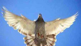 انشا درمورد پرواز بدون بال
