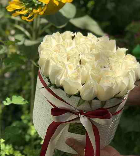 بهترین گل برای عیادت بیمار چیست