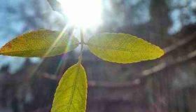مدت زمان رسیدن نور خورشید به زمین چقدر است
