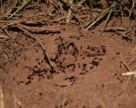 تحقیق درمورد زندگی مورچه ها (1)