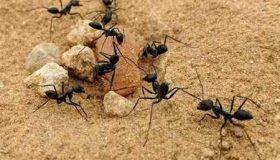 تحقیق درمورد زندگی مورچه ها (2)