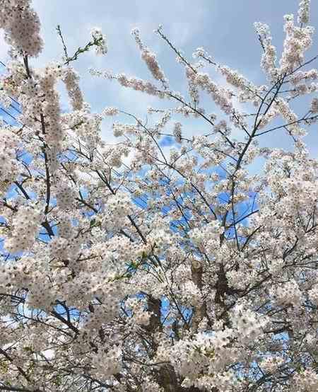 شعر درمورد بهار برای کودکان (2)
