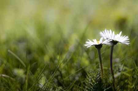 شعر درمورد بهار برای کودکان (3)