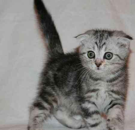 عکس گربه گران قیمت تیلور سویفت (1)