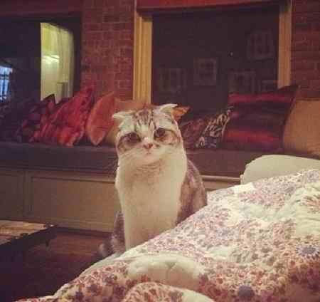 عکس گربه گران قیمت تیلور سویفت (3)