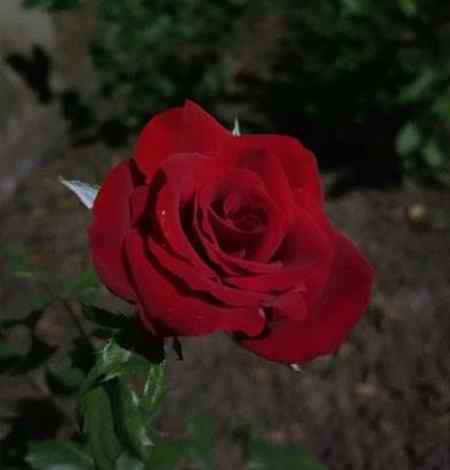 نوشته عینی و ذهنی درباره گل (2)