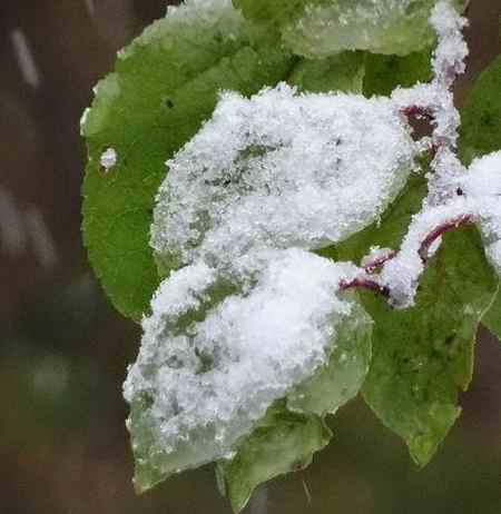 چرا در قرآن اسم برف نیامده است