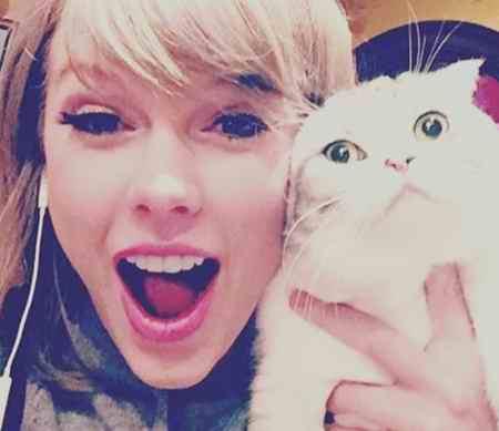 گربه خانگی تیلور سویفت 97 میلیون دلار می ارزد! (6)