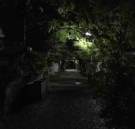 چه حیواناتی شبها فعالیت می کنند (1)