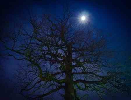 چه حیواناتی شبها فعالیت می کنند (2)