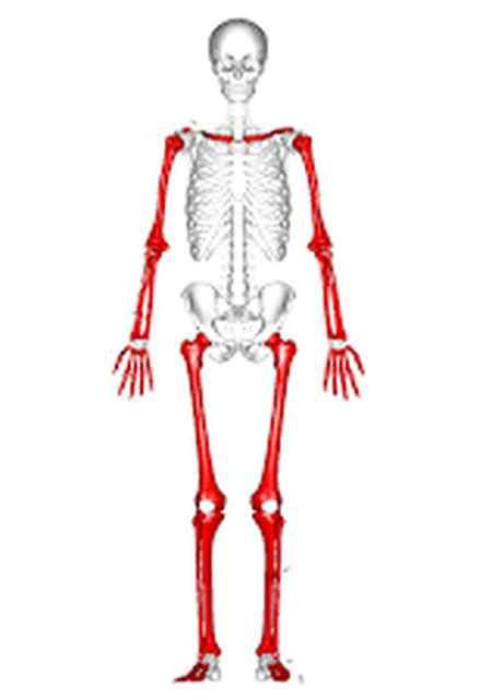 آزمایش مغز استخوان برای چیست