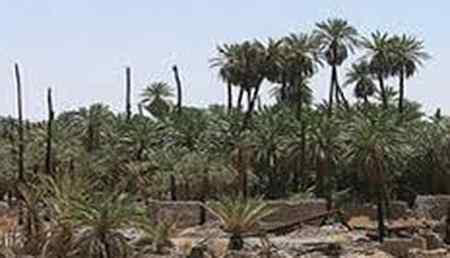 نام باغ غصب شده حضرت زهرا چیست