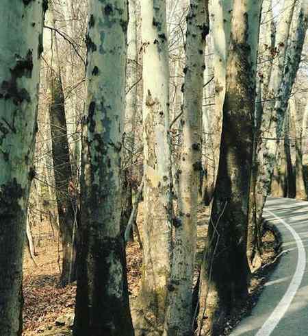 چه ارتباطی بین کتاب و درخت وجود دارد؟ چند نوع از این ارتباط را بنویسید