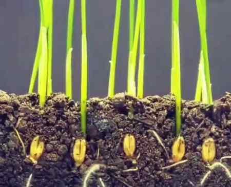 از دانه ها چه استفاده هایی میکنیم