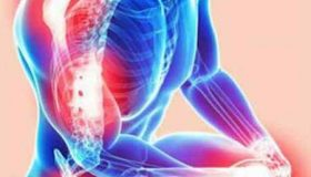 اسکلت بدن انسان چند استخوان دارد