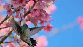به جز حشره ها چه جانوران دیگری به گرده افشانی گل ها کمک میکنند