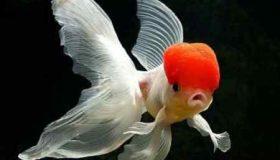 تحقیق کامل در مورد غذای ماهی ها برای کودکان