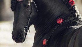 عمر اسب چقدر است